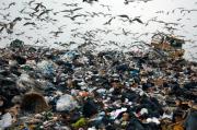 The Landfill. Photo by Loren McCarthy, presenting at TRASH.