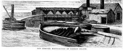 Barren Island Fish Oil Manufacturing 1871