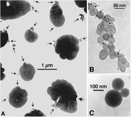 Transmission electron microscopy (TEM) images of  aerosol particles, including black carbon from Posfai et al. (1999).