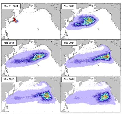 Image University of Hawaiʻi at Mānoa showing the probable pathways of the debris that entered the ocean on March 11, 2011, as estimated from historical trajectories of drifting buoys. Snapshots are shown projected each March from 2011 to 2016.