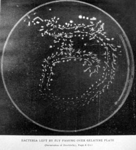 Image from Jackson, D. D. (1907). Pollution of New York harbor as a menace to health by the dissemination of intestinal diseases through the agency of the common house fly. The Merchants' Association of New York.