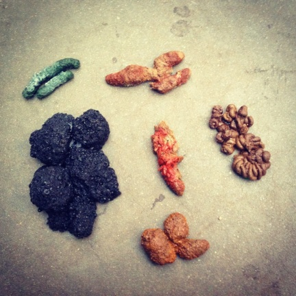 Collection of animal scat from Brooklyn Children's Museum.