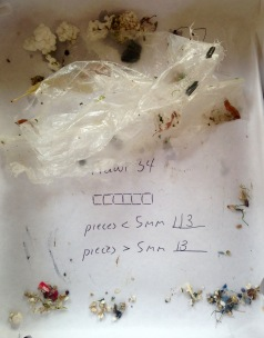 Plastics after one hour of trawling. Photo by Max Liboiron.