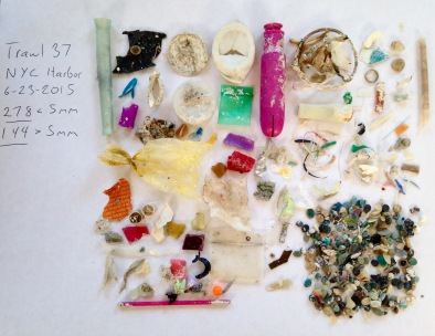 Plastics from one hour of trawling in the Hudson River. Photo by Max Liboiron.
