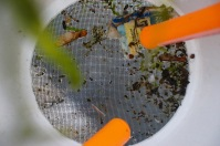 Samples collect in the mesh netting at the bottom of the scoop.