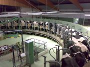 A rotary milking parlor at a modern dairy facility. Photo by Gunnar Richter. CC BY-SA 3.0.